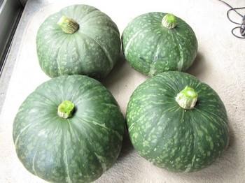 pumpkin_160817_16.jpg