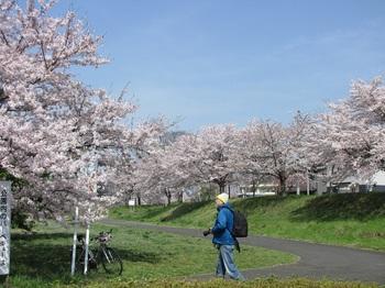 sakura-iwasawa_160406-4.jpg