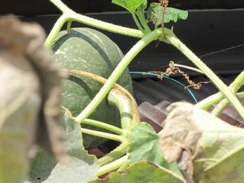 pumpkin_160817_14.jpg